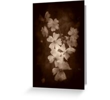 Where the wild roses grow ... Greeting Card