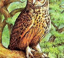 Owl by Natalie Berman