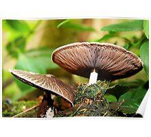 Charming Mushrooms Poster