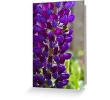 Purple Lupin Greeting Card