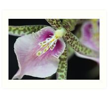 Exotic Orchid Art Print