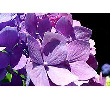 Chameleon of Flowers Photographic Print