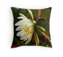 Time for Epiphyllum Throw Pillow