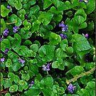 wild flowers... by dabadac