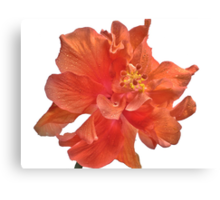 Orange Hibiscus - Close-Up Canvas Print