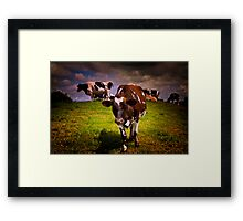 Hill Cows Framed Print