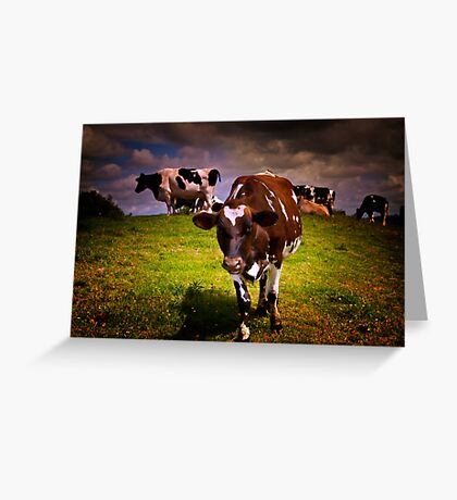 Hill Cows Greeting Card