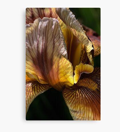 Spring - Iris Canvas Print