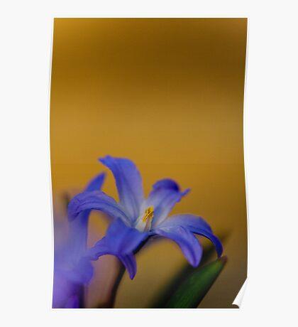 Blue flower 2 Poster