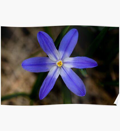 Blue flower 3 Poster