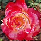 Frilly-edged rose by ♥⊱ B. Randi Bailey