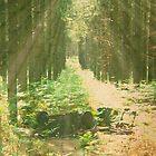 forest by tallulahminky
