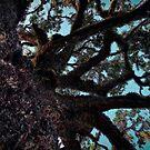 Old Oak by DHParsons