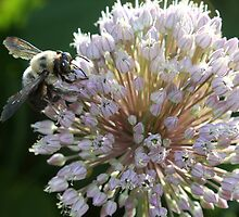 Bumble Bee by DebbieCHayes