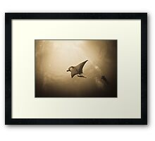 Soaring Manta with remora in the sun Framed Print