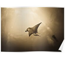 Soaring Manta with remora in the sun Poster