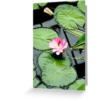 Nymphaea piyalarp - Water Lily Greeting Card