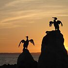 Cormorants at sunset by Racben