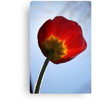 Fuzzy Tulip Canvas Print