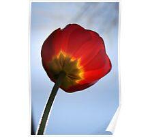 Fuzzy Tulip Poster