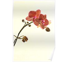 Red Spotted Orchid Poster