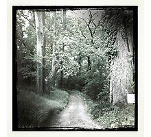 Path Photographic Print