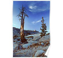 TREES, OLMSTEAD POINT Poster