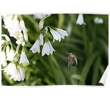 Bee In Flight Poster