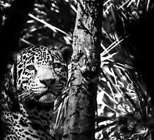 Jaguar  by hmaund