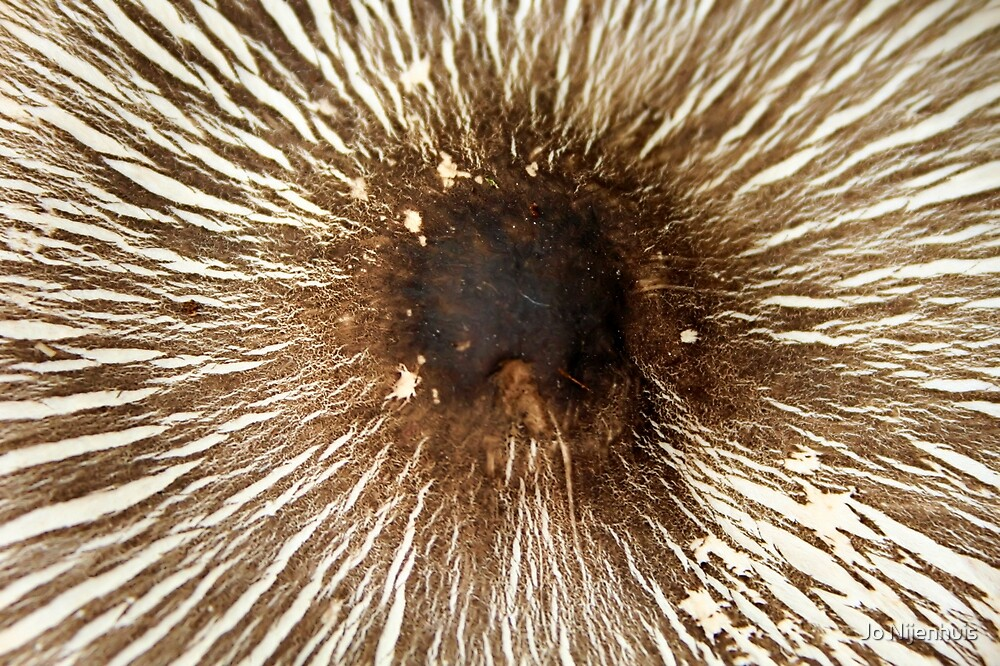 Mushroom's Cap by Jo Nijenhuis