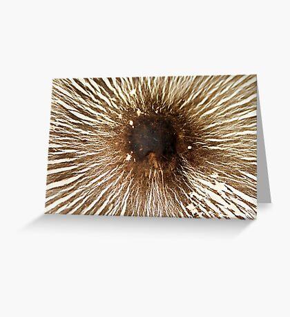 Mushroom's Cap Greeting Card