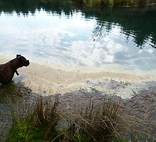 Dog in the Lake by jimandgay