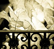 Leaves, Upper East Side, New York by Andrea Bell