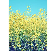 Rapeseed Summer Photographic Print