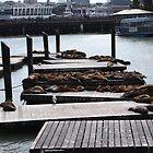Sea Lions on Pier by kevmarcn