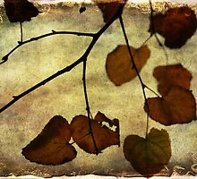 Last days of Autumn by Lynda Heins