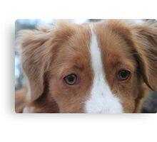 Nova Scotia Duck Tolling Retriever Puppy Canvas Print