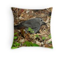 Gray Catbird Foraging in Leaf Litter Throw Pillow