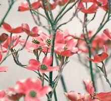Dogwood Tree, Washington DC by Andrea Bell