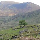 One Tree,,Comeragh Mountains,Co. Waterford,Ireland. by Pat Duggan
