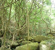 tall_spiny_trees growing amongst huge moss covered boulders by Joseph Green