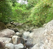 tiny stream trickle through huge white boulders surrounded by trees by Joseph Green
