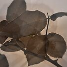 Rose Leaves 'n' Rain Drops (1) by Lozzar Flowers & Art