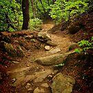 The Path up Namsan by Barbara  Brown