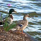 It's a beautiful evening, shall we take a swim? by Ann Reece