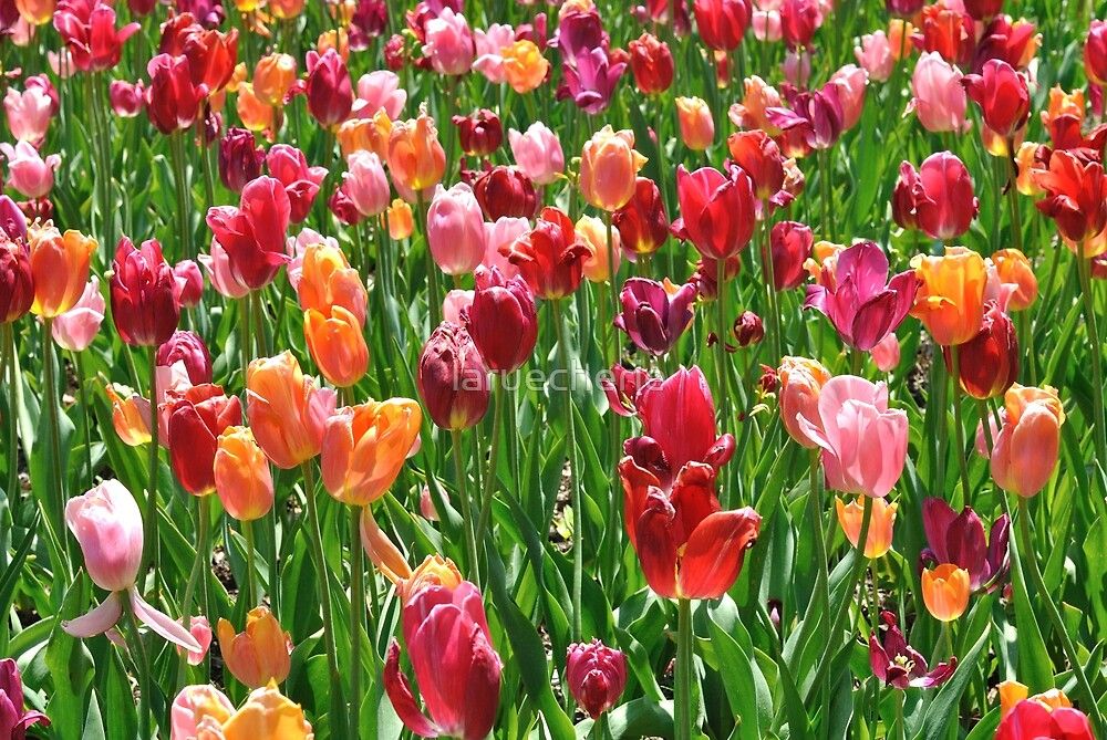 """Where flowers bloom so does hope."" Lady Bird Johnson by laruecherie"