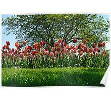A Tree Among Tulips  Poster