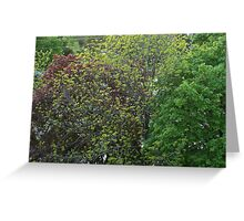 Trees Of Many Colours Greeting Card
