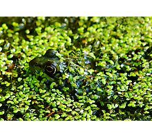 Undercover Frog Photographic Print