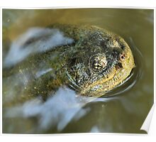Emerging Turtle Poster